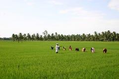 De landbouw van India Stock Foto