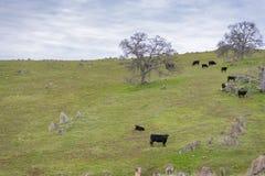 De landbouw van Landschap in Centraal Californië stock afbeelding