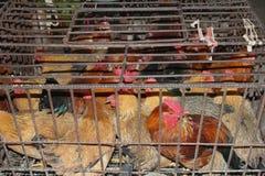 De landbouwbedrijfkippen kunnen Sars, H7N9, H5N8 en H5N1 virussen in China, Azië, Europa en de V.S. uitspreiden Royalty-vrije Stock Afbeeldingen