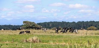 De landbouwbedrijven, de rivieren en de bossen van het zuideneiland van Nieuw Zeeland stock foto