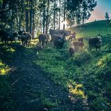 De landbouwbedrijven van de de canionweg van Palocolorado op rollende heuvels stock foto's