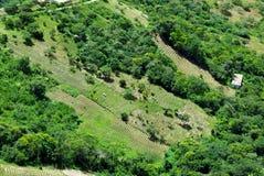 De landbouwbedrijven van de coca, de Bergen van de Andes stock foto