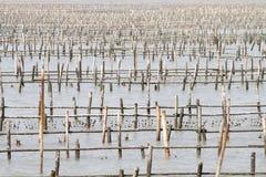 De landbouwbedrijven van de oester op yunlin, Taiwan Royalty-vrije Stock Foto