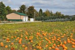 De Landbouwbedrijven van de Robafamilie in de Gemeente van het Noordenabington in Pennsylvania stock fotografie