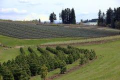 De landbouwbedrijven van het landschap & van de boom. stock afbeelding