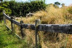 De landbouwbedrijven van Nieuw Zeeland in de zomer stock afbeelding