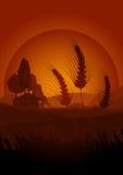 De landbouwconcept van de zomer Royalty-vrije Stock Fotografie