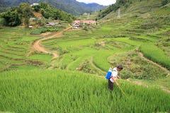 De landbouwer bespuit pesticide op het terrasvormige padieveld Stock Foto's