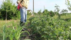 De landbouwer bestrooit aardappels met spuitbus, rijen van aardappel bloeiende installaties stock videobeelden