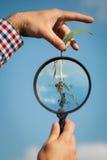 De landbouwer controleert het graan Stock Afbeeldingen