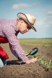 De landbouwer controleert het graan stock foto