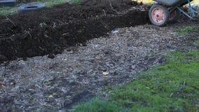 De landbouwer draagt het land in een kruiwagen voor het planten van organische en milieuvriendelijke groenten Het werk in stock videobeelden
