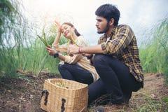 De landbouwer en de tuinlieden plukken groentenasperge Royalty-vrije Stock Afbeelding