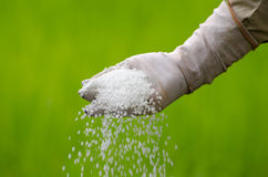 De landbouwer giet chemische meststof Stock Foto's