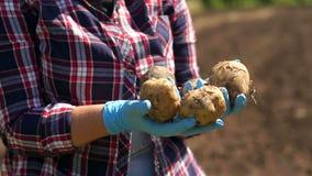 De landbouwer houdt aardappels op de achtergrond van een werkende tractor in het gebied stock videobeelden