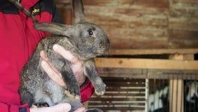De landbouwer houdt een konijn in zijn handen stock videobeelden
