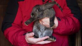 De landbouwer houdt een konijn in zijn handen stock video
