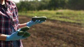 De landbouwer houdt komkommers op de achtergrond van werkende tractor in het gebied stock footage