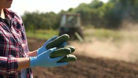 De landbouwer houdt komkommers op de achtergrond van werkende tractor in het gebied stock videobeelden