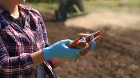 De landbouwer houdt wortelen op de achtergrond van een werkende tractor in het gebied stock video