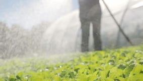 De landbouwer irrigeert groene jonge zaailingen op het gebied dichtbij een serre Close-up stock footage