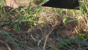 De landbouwer maakt het gras schoon van de het grasschoffel van het landbouwersonkruid slow-motion video de tuin van de de zomerl stock video