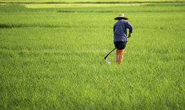De landbouwer met schoffelt in cultiveert gebied Royalty-vrije Stock Foto