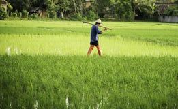 De landbouwer met schoffelt in het padieveld Stock Afbeeldingen