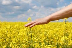 De landbouwer overhandigt oogst van dit jaar royalty-vrije stock afbeelding