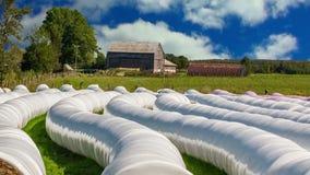 De landbouwer pakt keurig hooi voor vee voor de winter in stock videobeelden