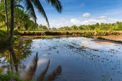 De landbouwer plant rijst op de padievelden in Ubud, Bali Royalty-vrije Stock Foto