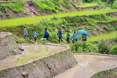 De landbouwer plant rijst op terrasvormig gebied voor nieuw seizoen Royalty-vrije Stock Afbeeldingen