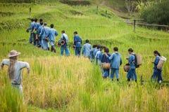 De landbouwer in rijst diende bij chiangmaiprovincie in Stock Foto's