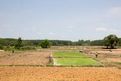 De landbouwer treft voorbereidingen om rijst bij platteland te planten Stock Foto
