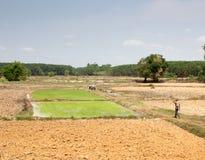 De landbouwer treft voorbereidingen om rijst te planten Royalty-vrije Stock Foto