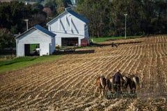 De Landbouwer van Amish stock foto
