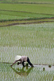 De landbouwer van Azië Stock Afbeelding