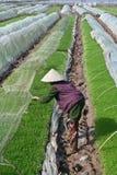 De landbouwer van Azië Stock Foto's
