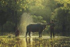 De landbouwer van badbuffels Royalty-vrije Stock Afbeelding