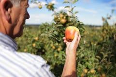 De landbouwer van de appel Stock Foto's