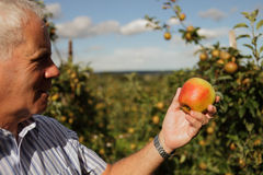 De landbouwer van de appel Stock Afbeelding