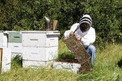 De Landbouwer van de honing Stock Afbeeldingen