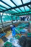 De landbouwer van de oester Stock Foto's