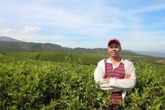 De landbouwer van de thee royalty-vrije stock foto's