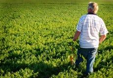 De landbouwer van de wortel Stock Afbeeldingen