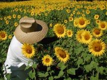 De Landbouwer van de zonnebloem stock afbeeldingen