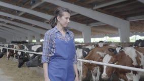 De landbouwer van het portretmeisje maakt inspectie van het landbouwbedrijf dat met kalveren en koeien zich in het vogelhuis bevi stock videobeelden