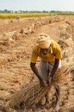 De landbouwer van Nepali bij geoogst gebied in Chitwan Nepal stock foto's