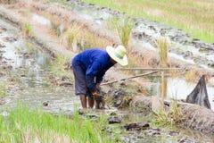 De landbouwer werkt royalty-vrije stock fotografie