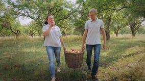 De landbouwers dragen een volledige mand van appelen stock videobeelden